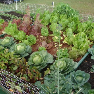 Vegetable Garden - Garden Services - Louisiana